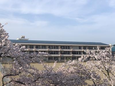 校庭の桜から校舎を望む